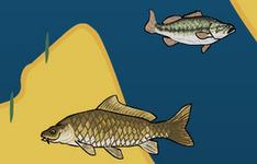 العاب سمك